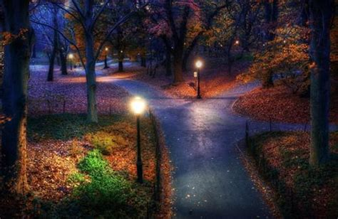 Nature Night View Look | HD Wallpapers